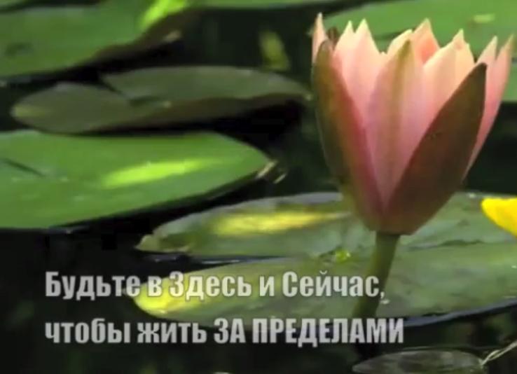 За пределами страха живет Любовь. Тина Тернер